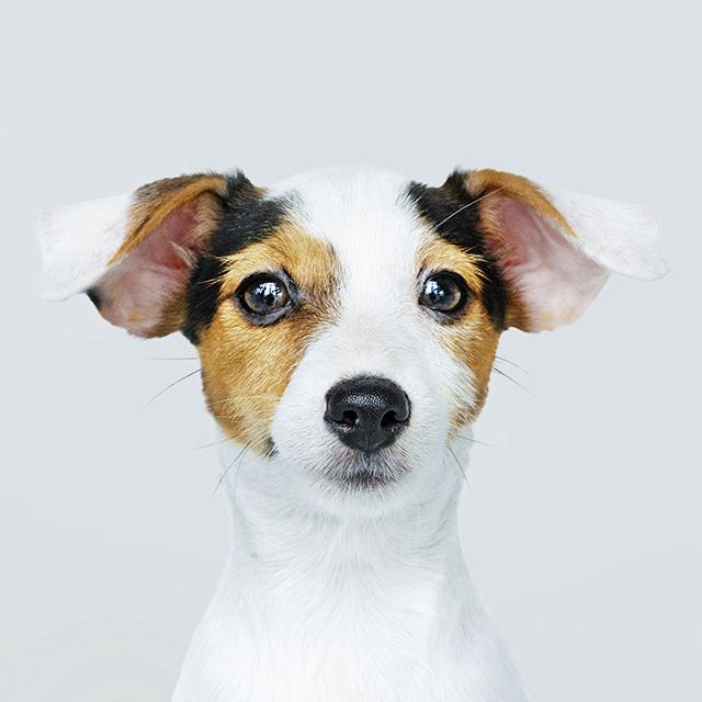 犬の診療 DOG
