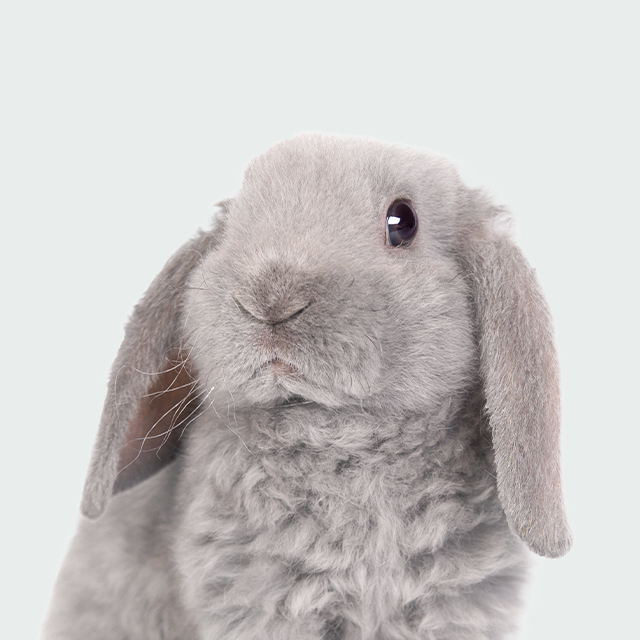 小動物の診療 SMALL ANIMALS